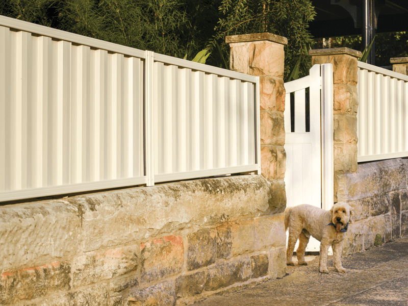 Metline Premium Colorbond fencing with a dog.